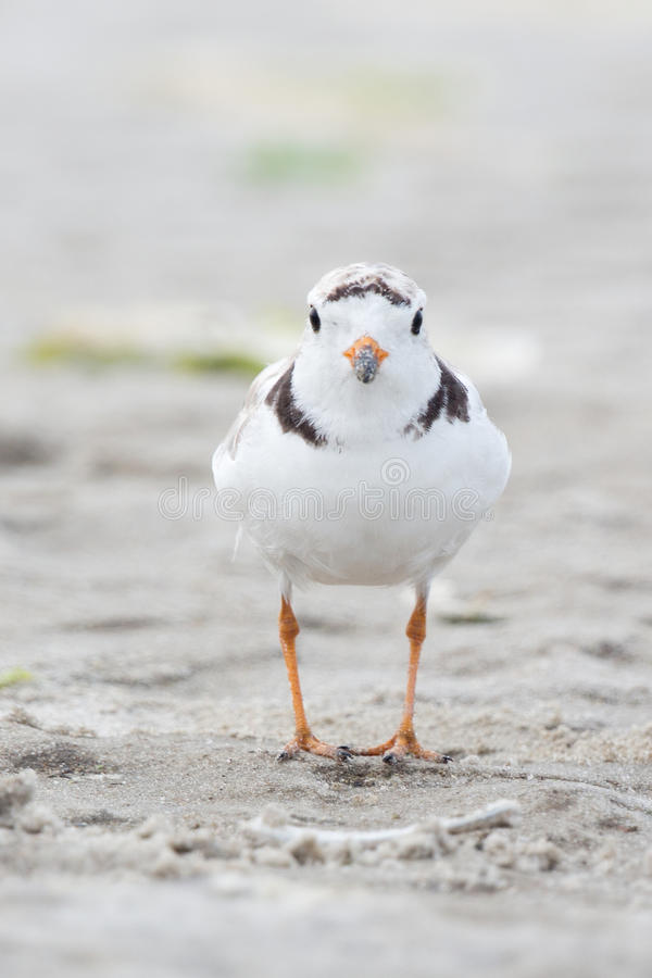 Leda i rör brockfågelfågelungen arkivbilder