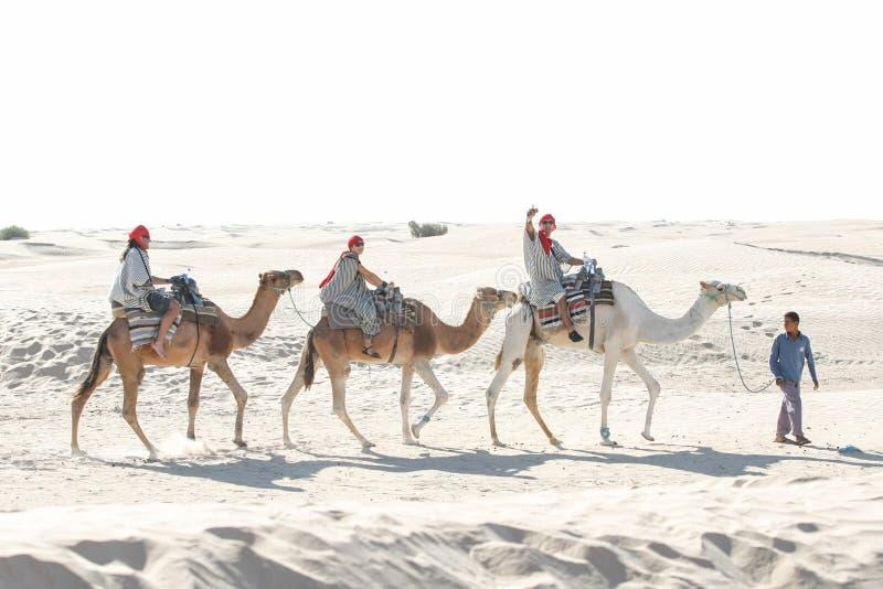 Ledande turist- grupp för beduin på kamel royaltyfri fotografi