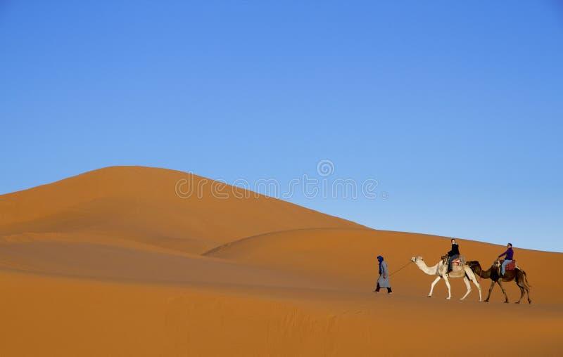 Ledande turister för arabisk man på två kamel längs ökensanddyn med bakgrund för blå himmel arkivbild