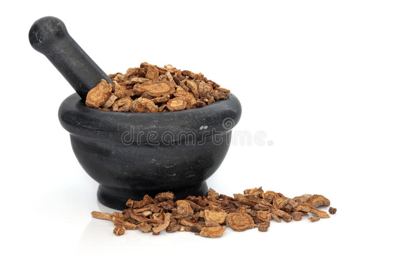 Download Ledebouriella Root stock image. Image of plant, naturopathy - 23777727