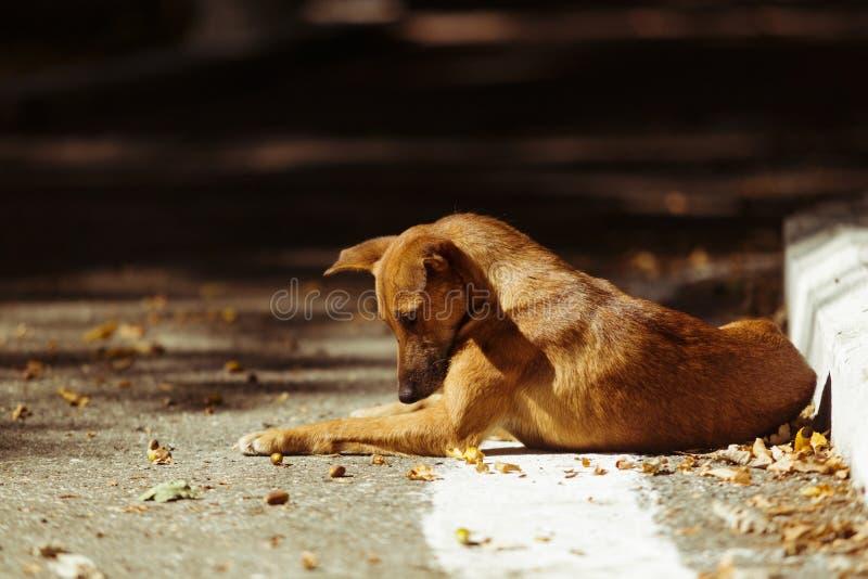 Ledsen övergiven hund som ligger på jordningen royaltyfri foto