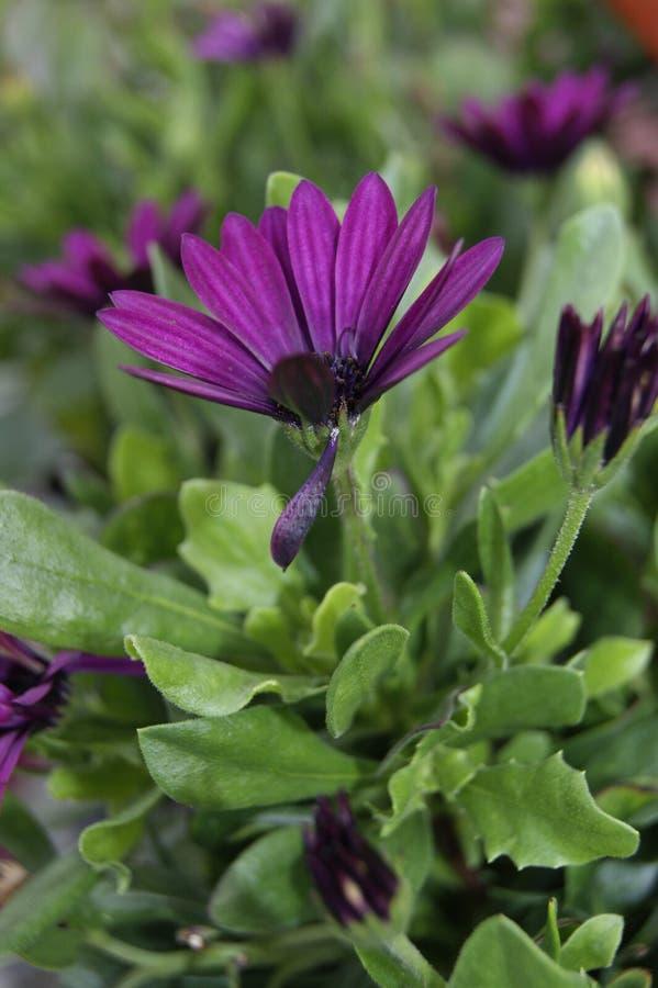 Ledsen bruten men härlig blomma arkivfoton