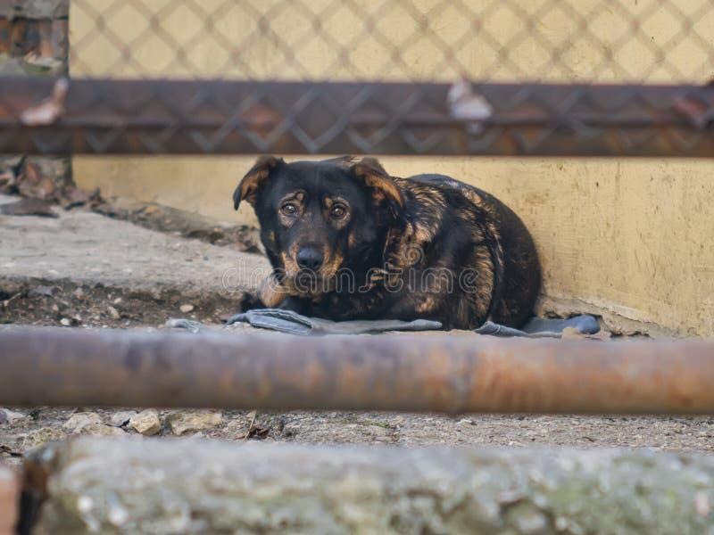 Ledsen ensam hund bak ett staket royaltyfri foto