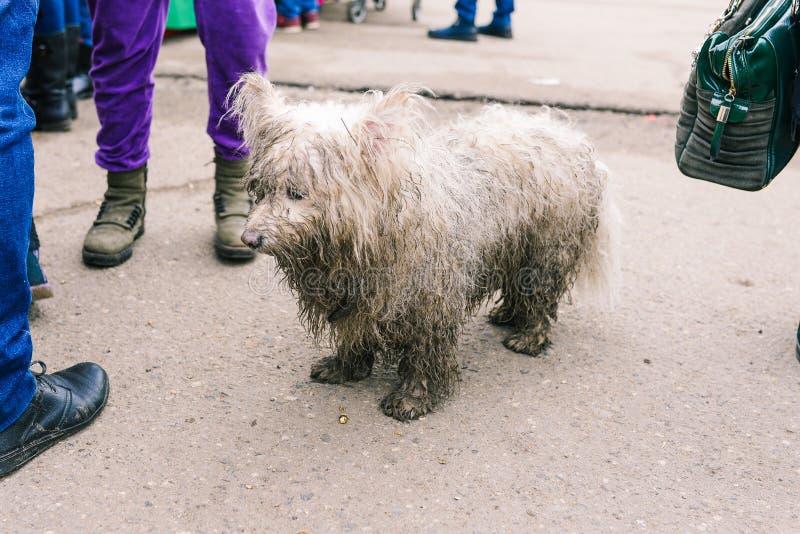 Ledsen ensam hund p? gatan En tillfällig hund ser plaintively in i avståndet Omsorg f?r heml?sa djur SAD hund royaltyfria foton