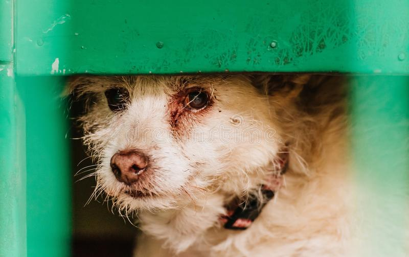 Ledsen gammal hund i hans bur arkivfoto
