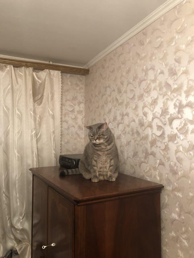 Ledsen grå katt som sitter på linnegarderoben husdjur royaltyfri fotografi