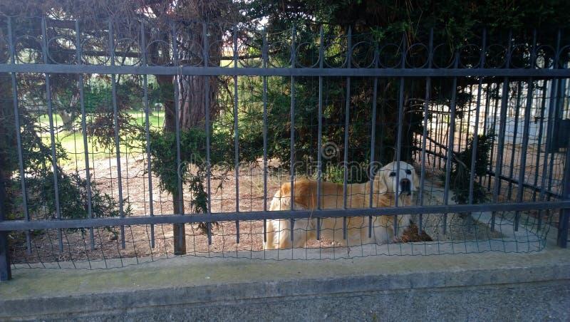 Ledsen hund bak staketet royaltyfri foto