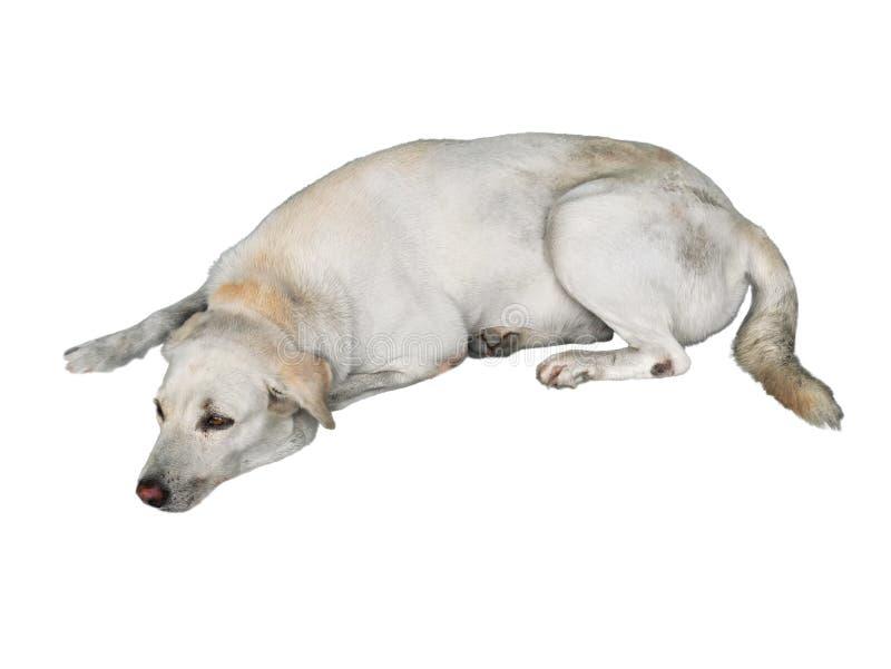 Ledsen hund som ner ligger på golvet som isoleras på vit bakgrund arkivbild