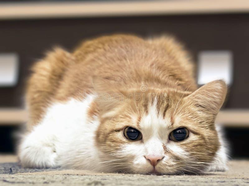 Ledsen katt arkivfoton