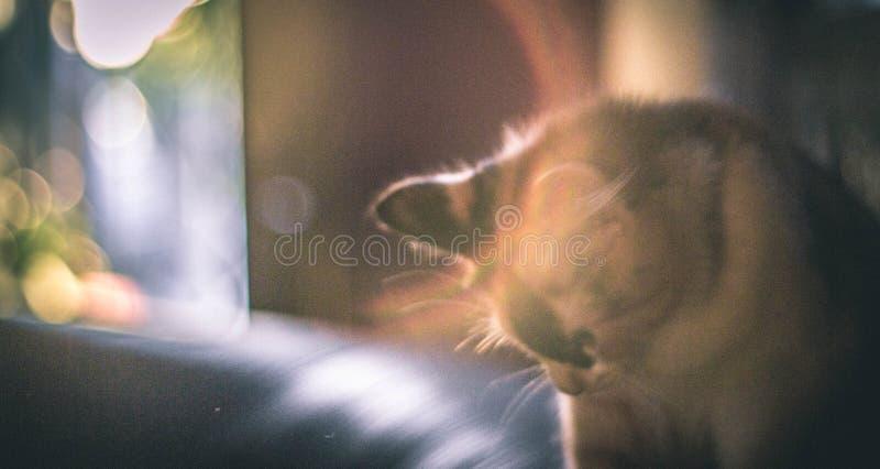 Ledsen katt i morgonen arkivbilder