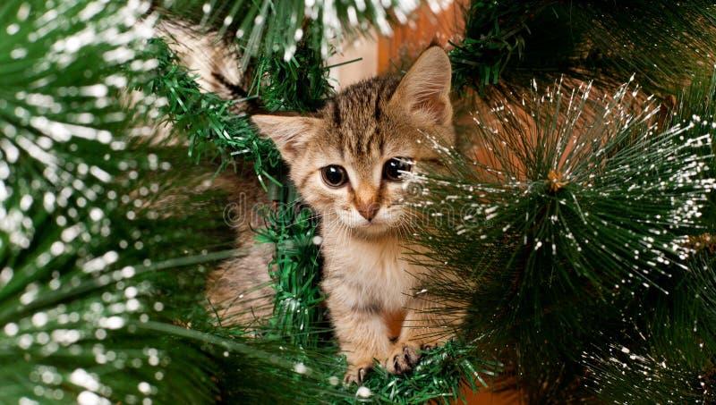 Ledsen kattunge på ett träd för nytt år arkivfoto