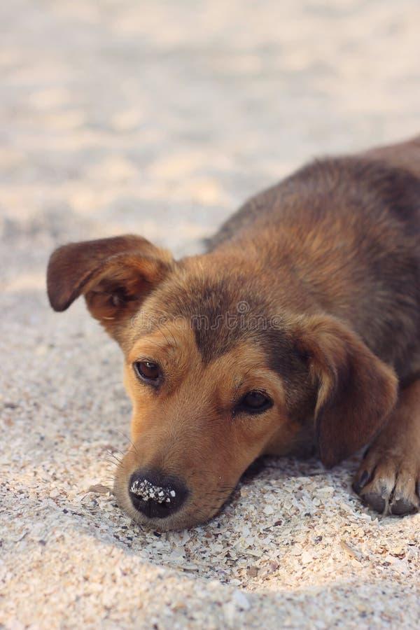 Ledsen tillfällig hund i sanden royaltyfri fotografi