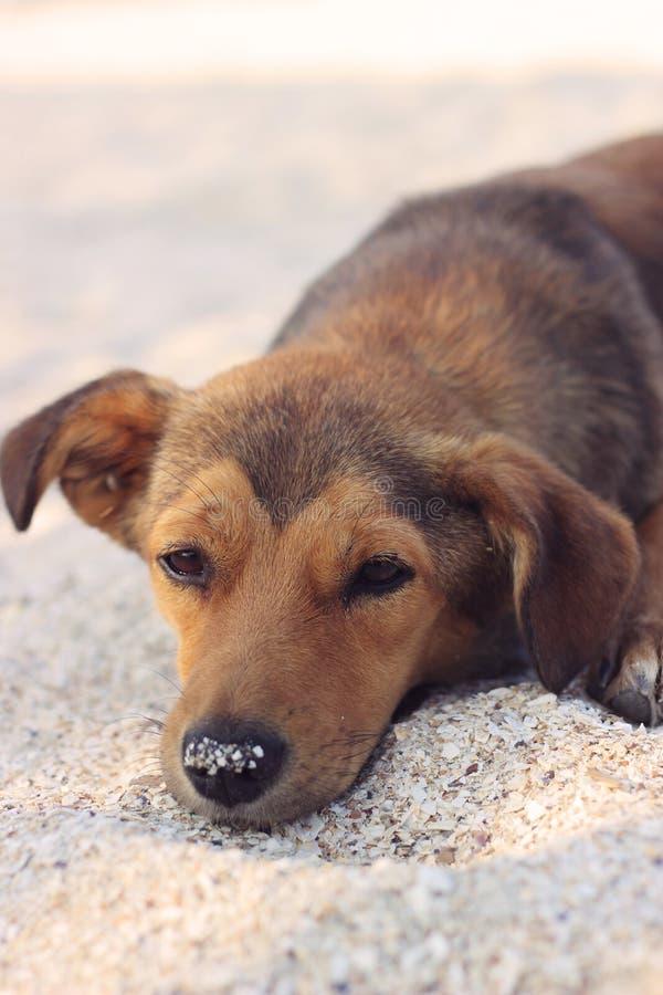 Ledsen tillfällig hund i sanden arkivfoton