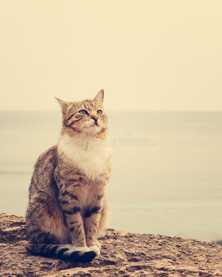 Ledset hemlöst kattsammanträde på stranden arkivfoton
