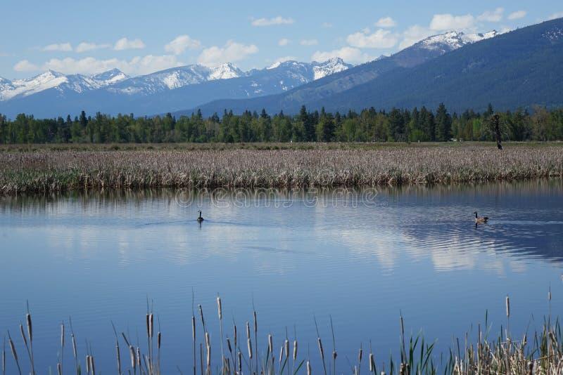 Lee Metcalf Wildlife Refuge - Montana foto de stock royalty free