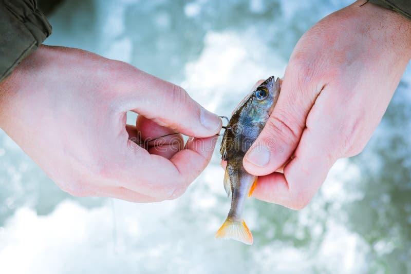 Leef aas op de haak in de hand van de visser, de winter visserij royalty-vrije stock afbeelding