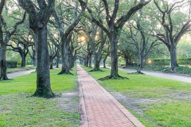 Leef de eiken luifel van de boomtunnel in Houston, Texas, de V.S. bij zonsopgang stock foto's