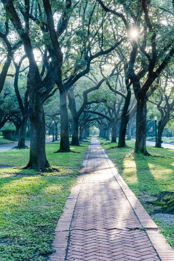 Leef de eiken luifel van de boomtunnel in Houston, Texas, de V.S. bij zonsopgang stock afbeelding