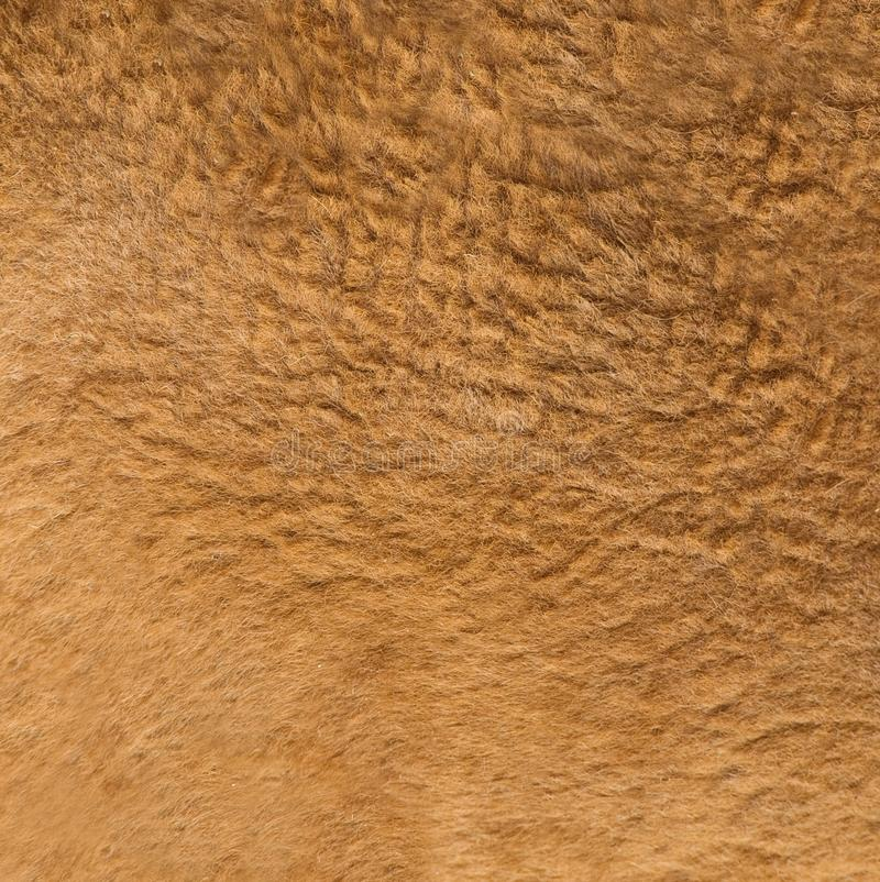 Leef de textuur van het kangoeroebont stock afbeeldingen