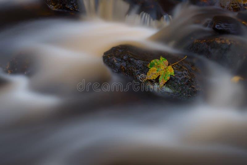 Leef del otoño en una roca imagen de archivo libre de regalías