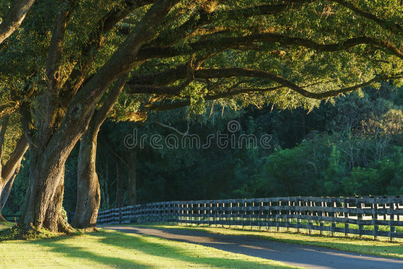 Leef eiken bomen over weg stock fotografie