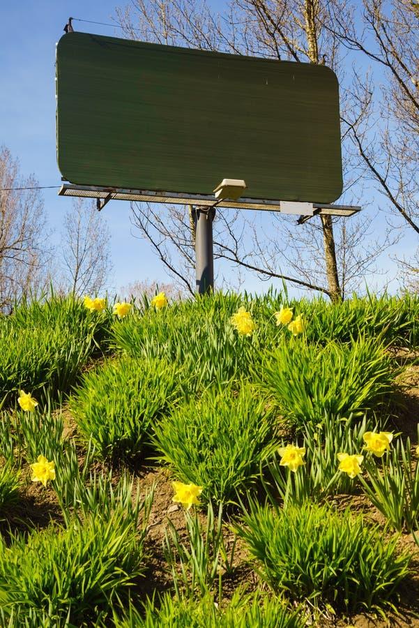 Leeg aanplakbord en gele gele narcissenbloemen stock foto's
