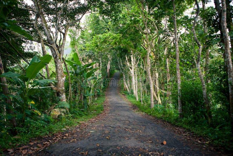 Leeg de oude weg in de wildernis met gevallen bladeren royalty-vrije stock foto's