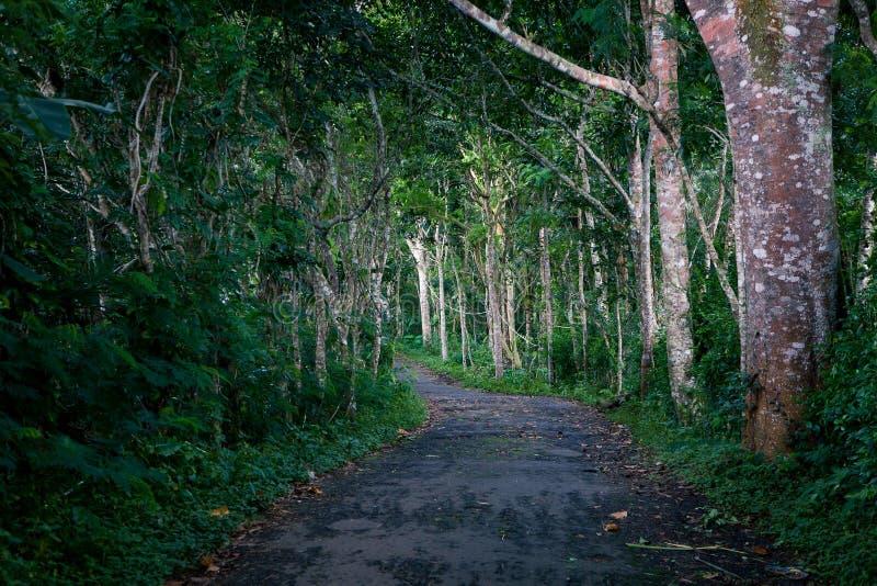 Leeg de oude weg in de wildernis met gevallen bladeren royalty-vrije stock fotografie