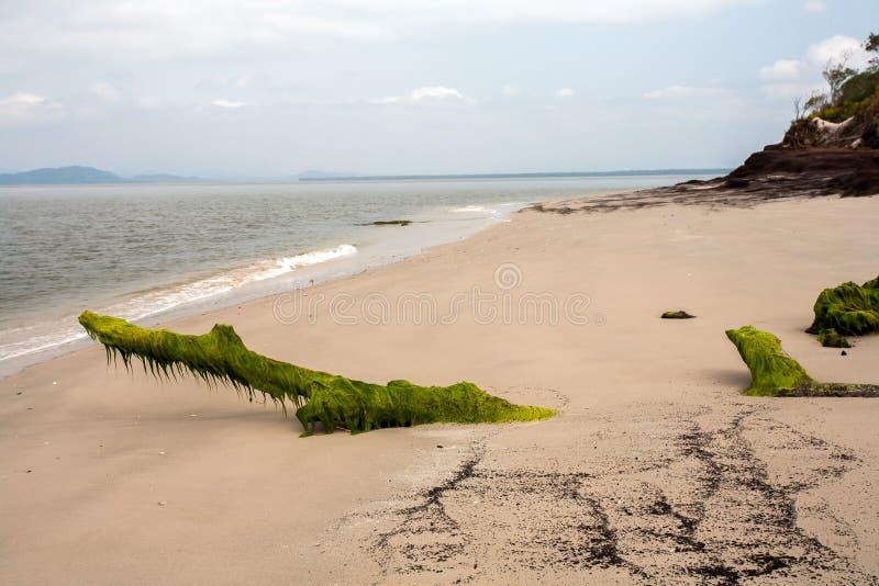 Leeg die strand met boomstammen met zeewier worden behandeld stock fotografie