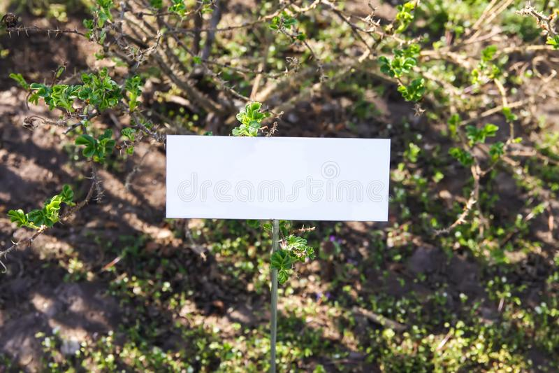 Leeg etiket op bloembed in park royalty-vrije stock foto's