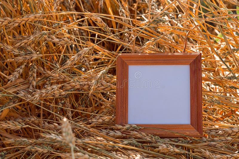 Leeg kader in de oren van tarwe stock foto