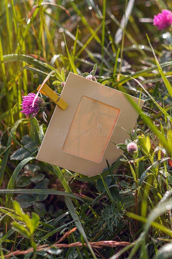 Leeg kader in het gras en de klaver in openlucht royalty-vrije stock afbeeldingen