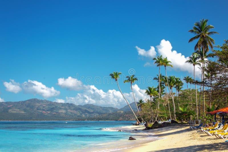 Leeg mooi Caraïbisch strand met wit zand, sunbeds en hoge palmen stock fotografie