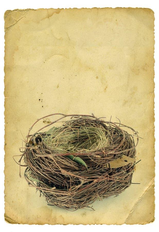 Leeg nest royalty-vrije stock afbeeldingen