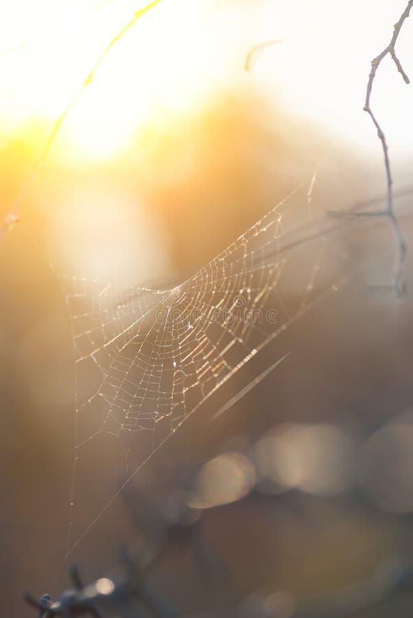 Leeg spinneweb bij dageraad zonder een spin stock foto