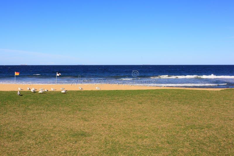 Leeg strand en gazon met zeemeeuwen royalty-vrije stock fotografie
