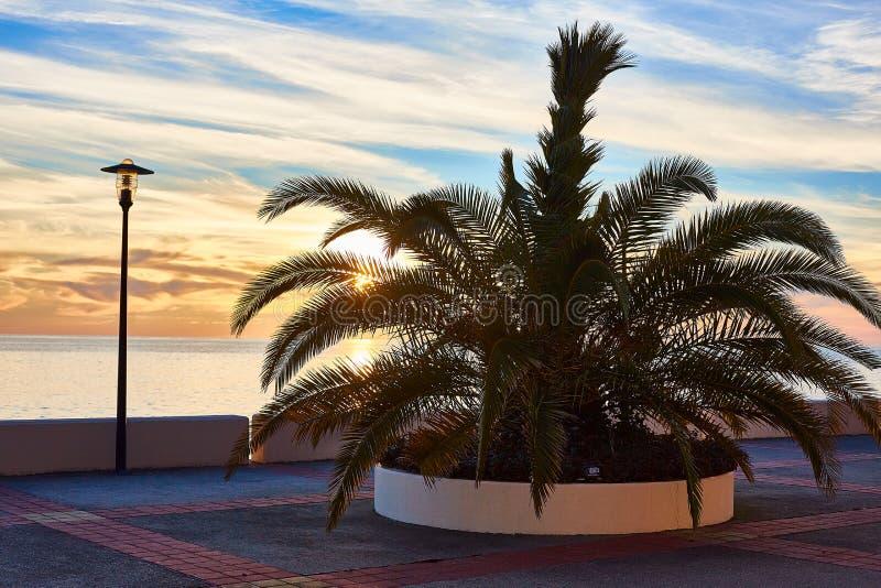 Leeg strand met palm en lantaarn stock foto's
