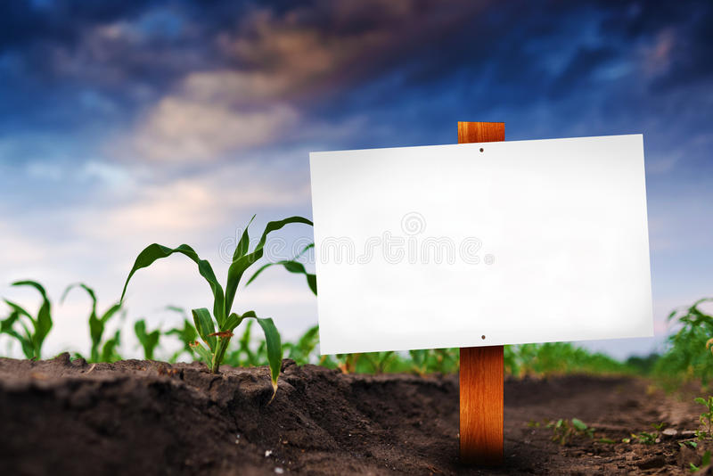 Leeg teken op graan landbouwgebied stock afbeelding