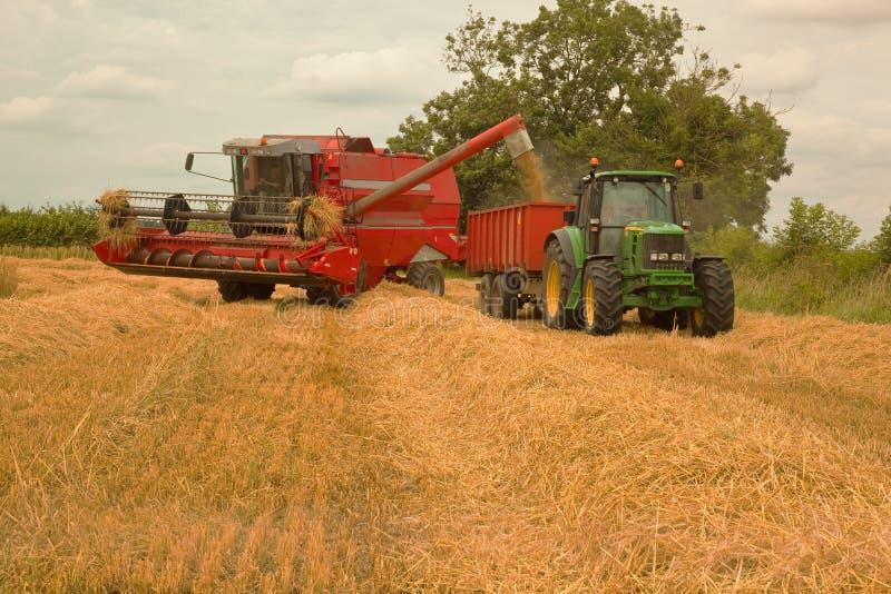Leegmakend geoogste gerst dat aan landbouwbedrijf moet worden vervoerd royalty-vrije stock foto's