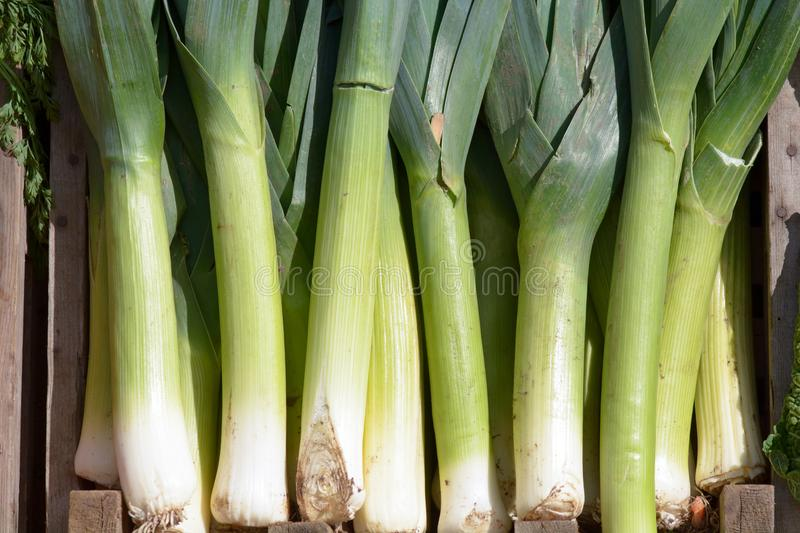 Leeks on display outside Green-grocers shop. Leeks on display for sale outside Green-grocers shop stock image