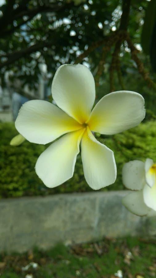 LeeLawadee images libres de droits