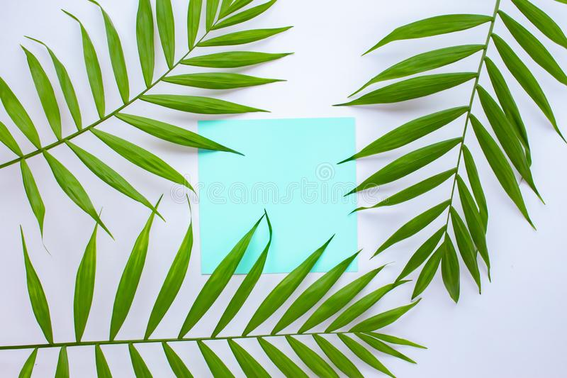 Leere blaue Karte auf tropischen Palmbl?ttern, Sommerferienkonzept, Schablonenplan f?r das Addieren Ihres Entwurfs oder Textes aq stockfoto