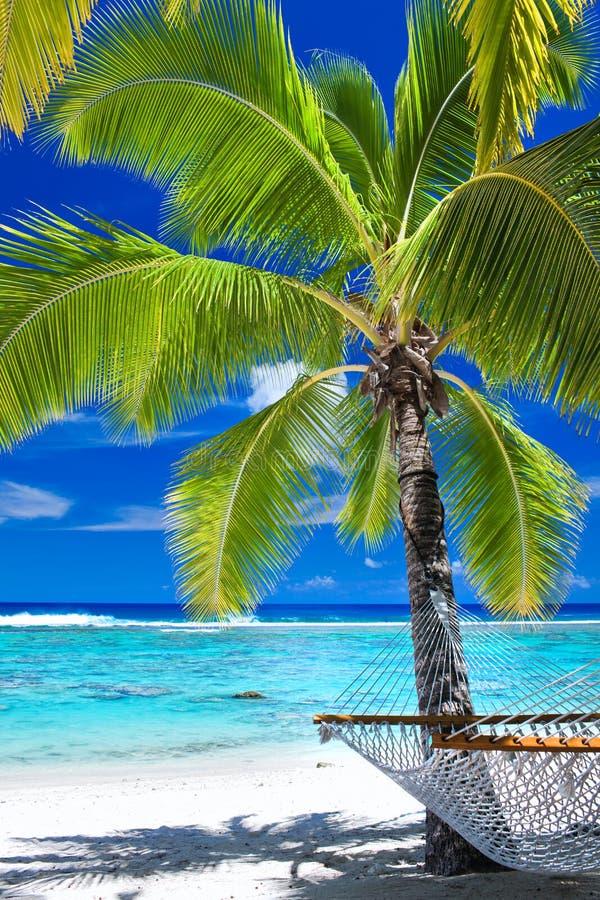Leere Hängematte unter Palme auf dem Strand lizenzfreie stockfotos