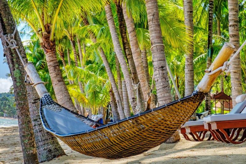 Leere Hängematte zwischen Palmen auf tropischem Strand lizenzfreie stockfotos