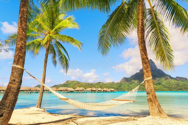 Leere Hängematte zwischen Palmen auf tropischem Strand stockfoto