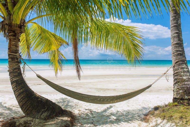 Leere Hängematte zwischen Palmen auf tropischem Strand stockfotos