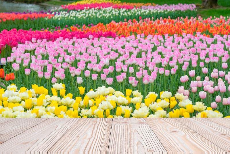 Leere hölzerne Tabelle mit bunter Jahreszeit des Tulpenblumen-Hintergrundes im Frühjahr, verspotten oben für Ihre Produktanzeige  lizenzfreie stockfotografie