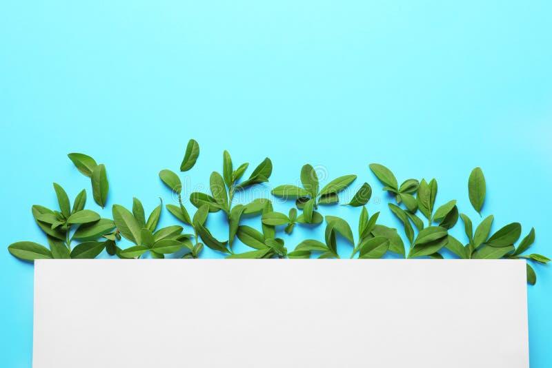 Leere Karte mit grünen Blättern lizenzfreie stockfotos