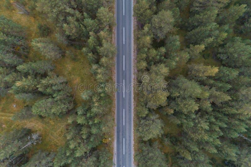 Leere Straße durch die Kiefernwaldvogelperspektive lizenzfreie stockfotografie