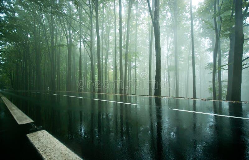 Leere Straße durch nebelhaften dunklen Buchenwald lizenzfreie stockfotografie